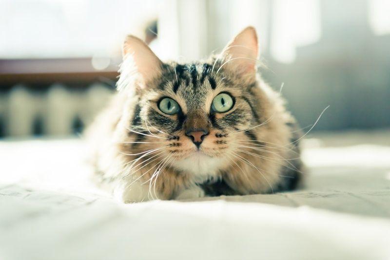 10 житейски съвета от вашата... котка