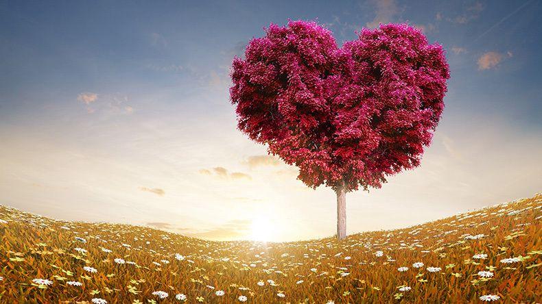 """Дзен-учител обяснява какво в действителност означава фразата """"обичам те"""""""
