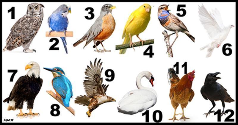 Коя птица е вашето второ Аз – птичи хороскоп