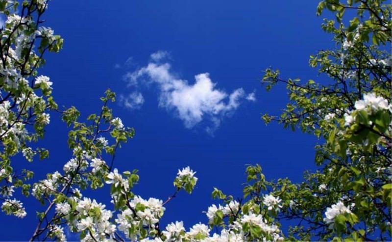 8 мига от пролетта
