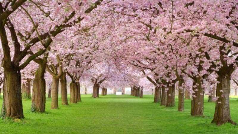 Себеуважението е като градина