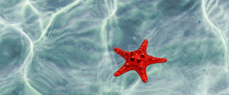 История за момчето и морската звезда